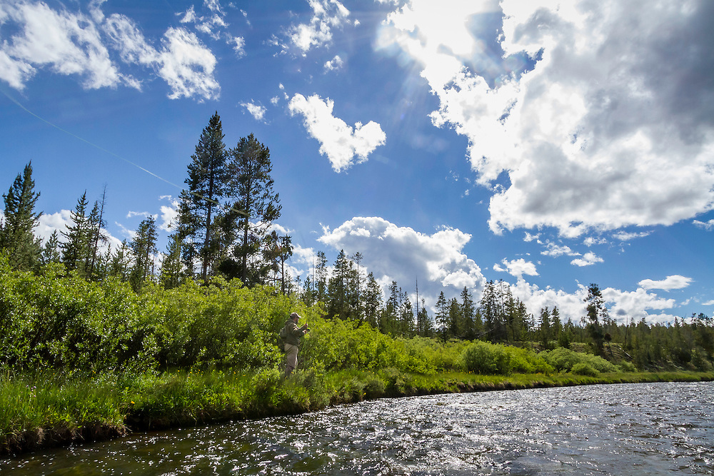 A fly fishing angler casts streamers along the banks of the Madison River in Yellowstone National Park on a warm Summer day.