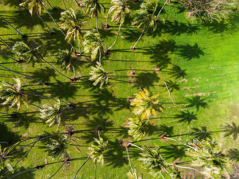 Aerial photo of coconut trees, Papara, Tahiti, French Polynesia