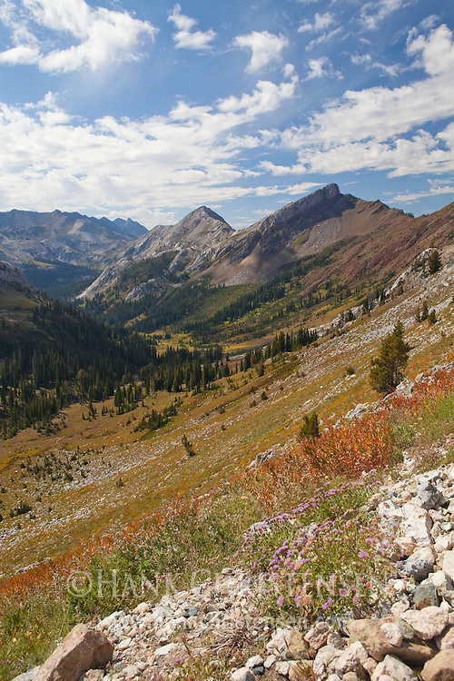 Wildflowers bloom near Hawkins Pass, with Jackson Peak and the Imnaha Valley in the distance, Eagle Cap Wilderness, Oregon