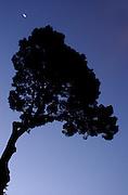 Redwood Memorial Grove. 5:58am<br /> 9-9-04