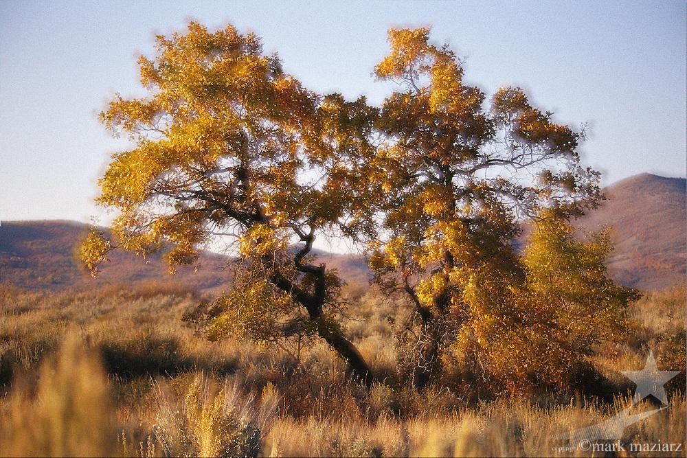 fall scenics of gamble oaks in Park City, UT USA area