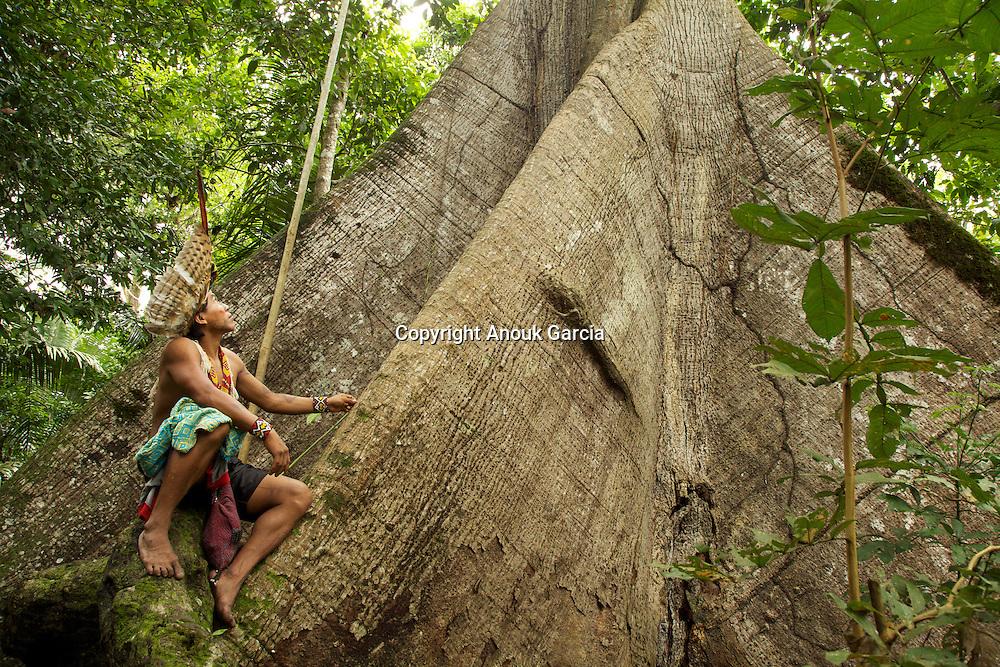 Pied de Samauma - Ceiba Pentandra Gaertn - ou kapokier, l'arbre vénéré par les Mayas et les populations amérindienne est un arbre sacré dans la mythologie Huni Kuin. Il est l'axe du monde d'où sont descendus les hommes. | Foot of Samauma - Ceiba Pentandra Gaertn - or kapokier, the tree venerated by the Mayas and the populations Amerindian is a tree crowned in mythology Huni Kuin. It is the axis of the world from where the men are descended.
