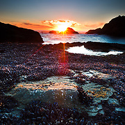 Layers of mussels are exposed to the setting sun on Second Beach in Olympic National Park in Washington.