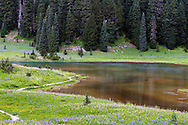 Wildflowers grow along side Tipsoo Lake in Mount Rainier National Park in Washington State, USA.