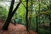 Het bos bij Berg en Dal, geheten Heerlijkheid Beek.<br /> <br /> The woods near Berg en Dal.