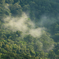 Mist rising up from the rainforest, Gunung Silam, Sabah, Malaysia, Borneo, South East Asia.