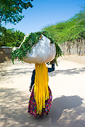 Indian woman villager carrying animal feed at Sawai Madhopur near Ranthambore in Rajasthan, India