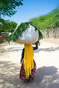 Indian woman villager carrying animal feed at Sawai Madhopur near Ranthambore in Rajasthan, India