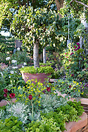 M&amp;G Investments Garden designed by Bunny Guiness.<br /> Raised wicker bed with planting including tulips, parsley, lettuce, kale and purple basil.<br /> Containers with Ficus carica (fig)