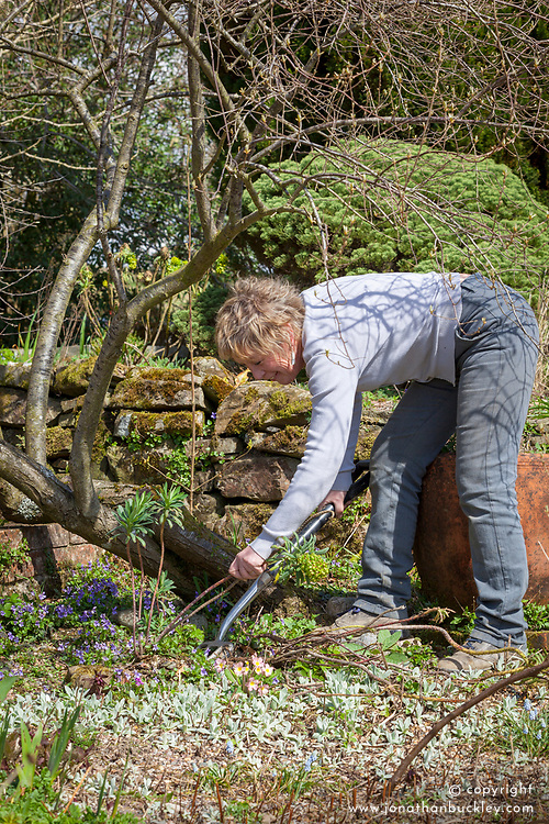 Carol klein weeding euphorbia out of bed of violets