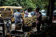 Tan Eow Chong (left) looks on as people sort through baskets full of durian at Durian Kaki, Tan Eow Chong's roadside durian stall, in Bayan Lepas, Pulau Pinang, Malaysia on June 17th, 2019. Tan Eow Chong is an award-winning durian farmer famed for his Musang King variety, and last year exported 1000 tons of the fruit to China from his family-run durian empire, expanding from an 80 acre farm to 1000 acres.  Photo by Suzanne Lee/PANOS for Los Angeles Times