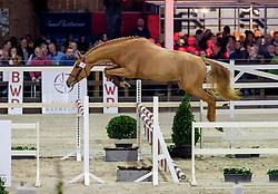 072, L'Arezzo Keros<br /> BWP Hengstenkeuring -  Lier 2020<br /> © Hippo Foto - Dirk Caremans<br />  17/01/2020