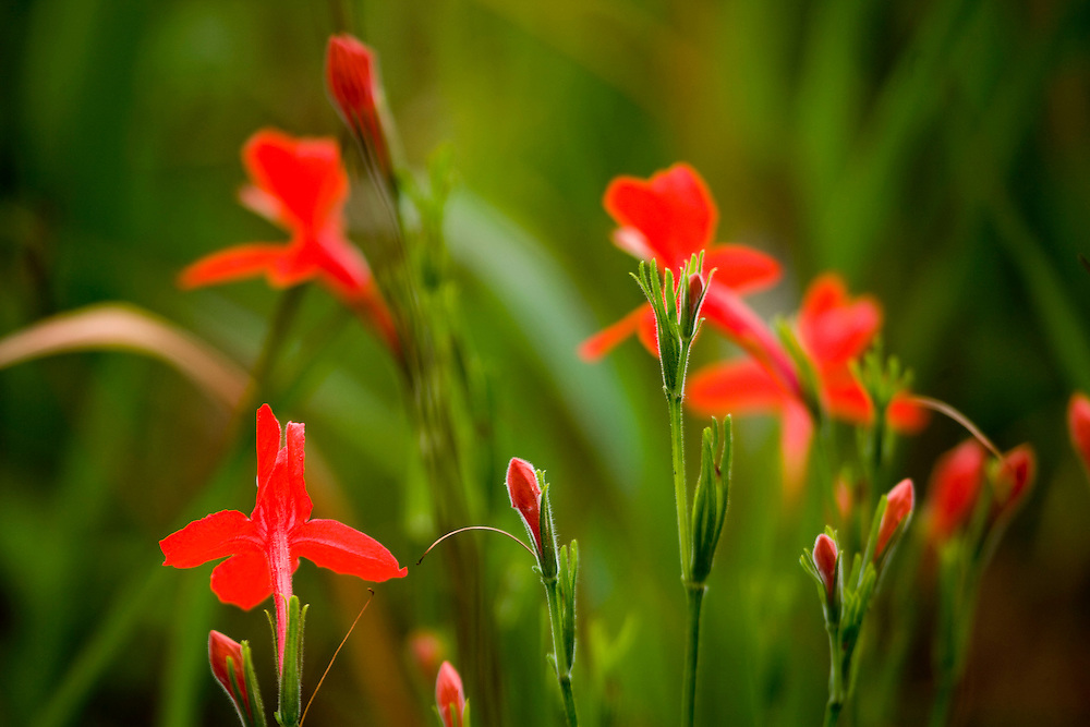 Jeceaba_MG, Brasil...Detalhe de uma flower em Jeceaba, Minas Gerais...A flower detail in Jeceaba, Minas Gerais...Foto: JOAO MARCOS ROSA / NITRO