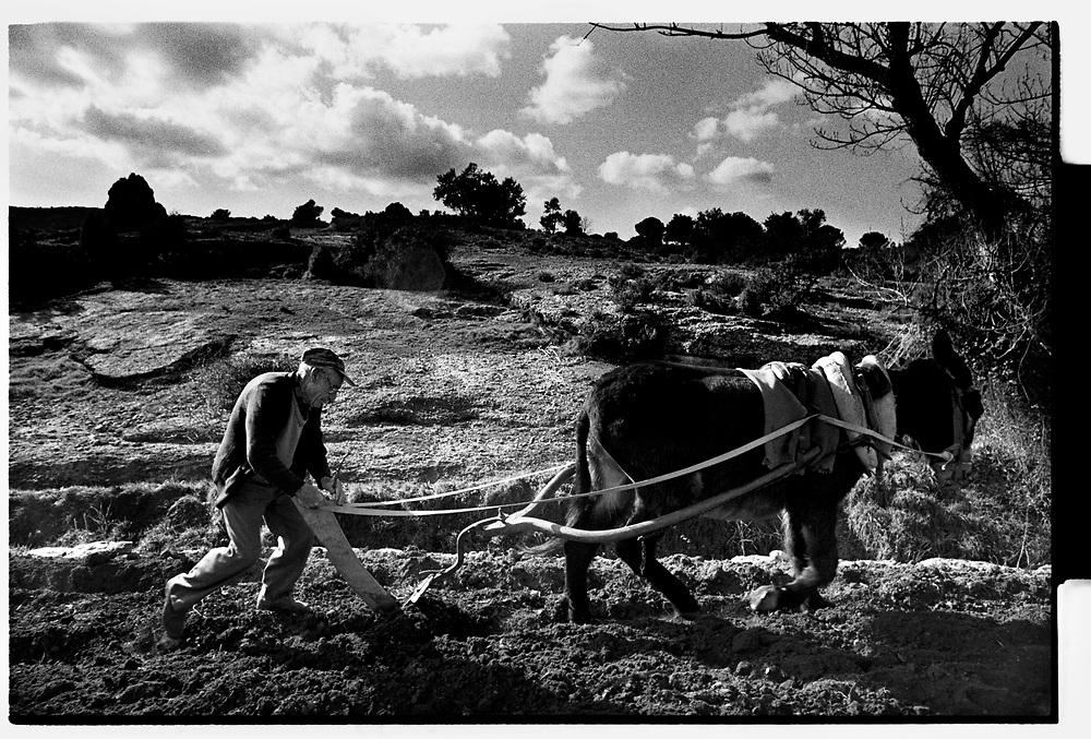 Belmonte de San Jose,Teruel, Spain.A man plowing with a donkey.©Carmen Secanella