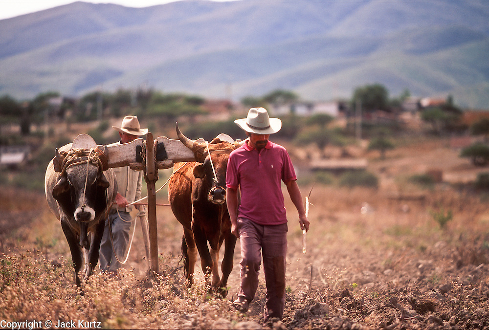 01 DECEMBER 1991, OAXACA, MEXICO: Farmers use oxen to plow their fields near Oaxaca, Mexico, Dec. 1, 1991. .PHOTO BY JACK KURTZ