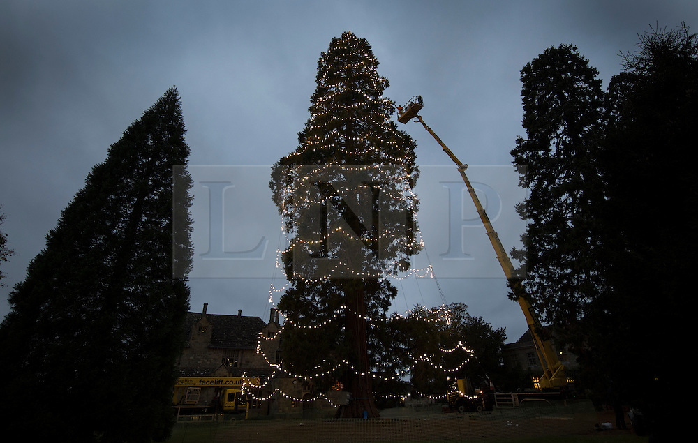 © Licensed to London News Pictures. 15/11/2016. Ardingly, UK. Workers put the final lights on the tallest Christmas tree in the UK at Wakehurst Place. Every year for the last 24 years teams of arboriculturists climb the 110 ft [33 metres] redwood to string up the 1800 LED Christmas lights. The giant tree can be seen for miles around and acts as an unofficial beacon to pilots landing at nearby Gatwick airport over the festive period.  Photo credit: Peter Macdiarmid/LNP