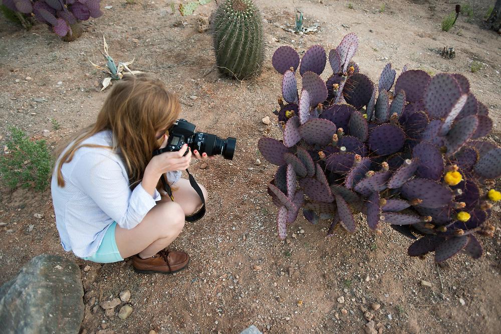Tucson AZ<br /> <br /> Photographing Cactus