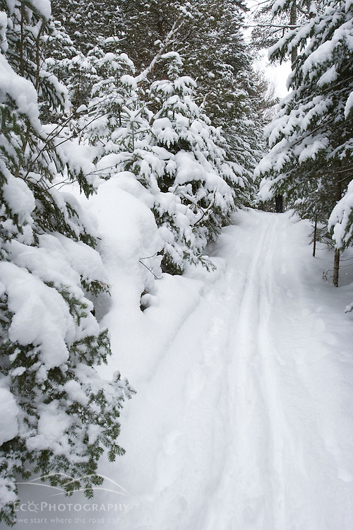 Cross-country skiing near the AMC's Little Lyford Pond Camps in Maine's Northern Forest.