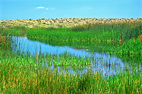 Wetlands habitat around Cotton Lake in the Great Sand Dunes National Park and Preserve.  San Luis Valley, Colorado.