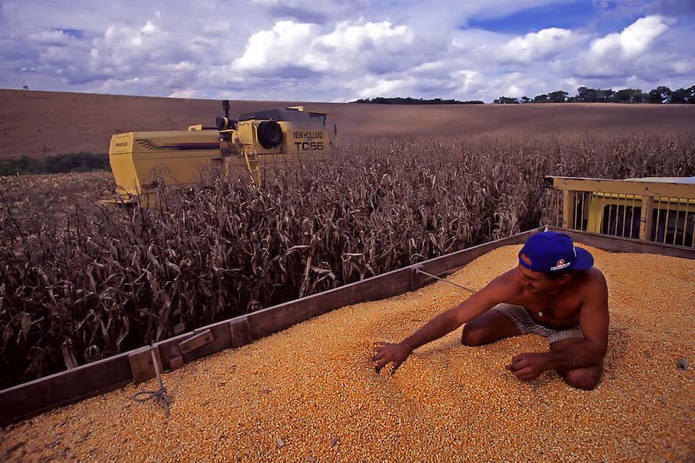 Lagoa Dourada_MG, Brasil...Colheita de milho em Lagoa Dourada, Minas Gerais...The corn crop in Lagoa Dourada, Minas Gerais...Foto: JOAO MARCOS ROSA / NITRO