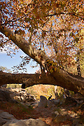 Visitors to Madera Canyon enjoy a picnic and a hike and Fall colors in the Santa Rita Mountains, a Sky Island in the Coronado National Forest, Sonoran Desert, Arizona, USA.  Sycamore trees show their autumn color along the seasonal flowing Madera Creek.