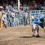 Great timing for this skillful cowboy as he jumps off a galloping horse to catch a bullock.
