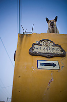 A german Shepherd dog protects his home while standing on the roof.  San Miguel de Allende, Mexico