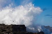 Curio Bay, crashing wave