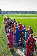 Women farmers in their paddy fields near Bagabar village in the Maharai Gani district of India. Manav Seva Sansthan, MSS negotiated with the government to lease this 7 acres of land to the community rather than just a family. Nearly 90 women share the land.