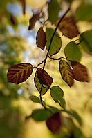 A branch of early autumn leaves caught by a gentle breeze.