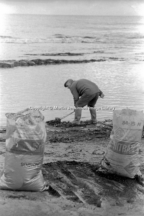 Collecting sea coal, Ellington 6/12/1984.