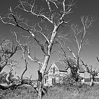 Dying trees and old barn in rural environment in USA