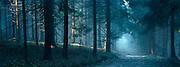 Sun breaking through mist in a forest