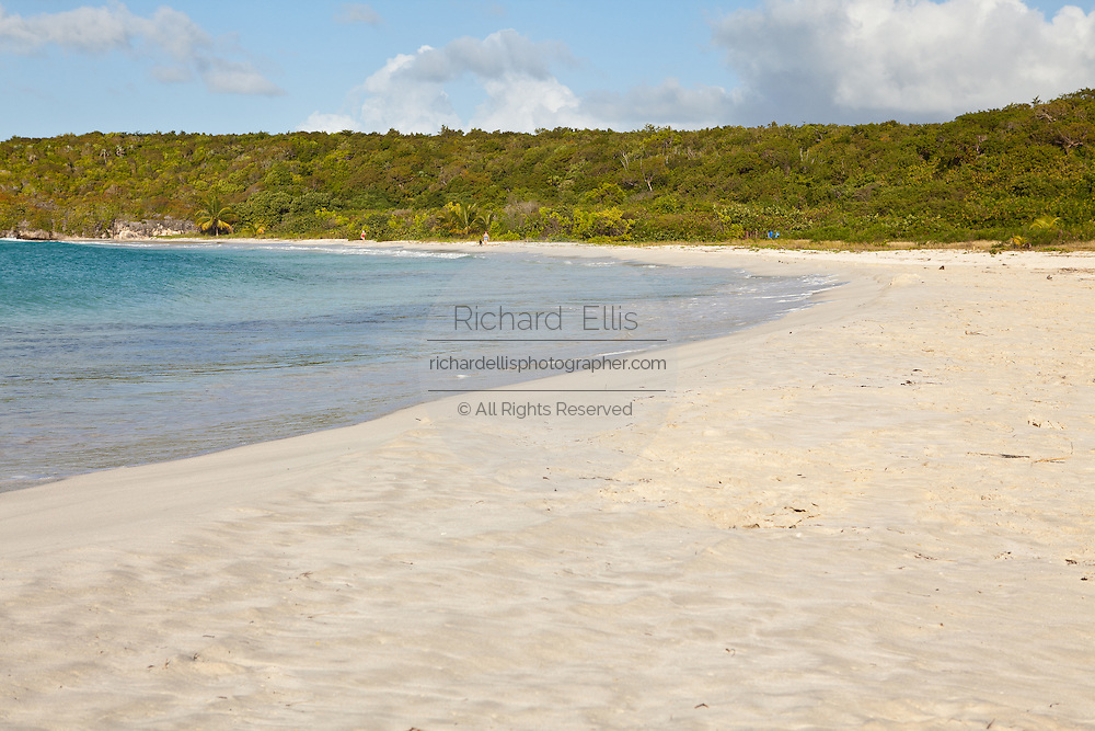 Red Beach (Playa Caracas) and coconut palms in Vieques Island, Puerto Rico.