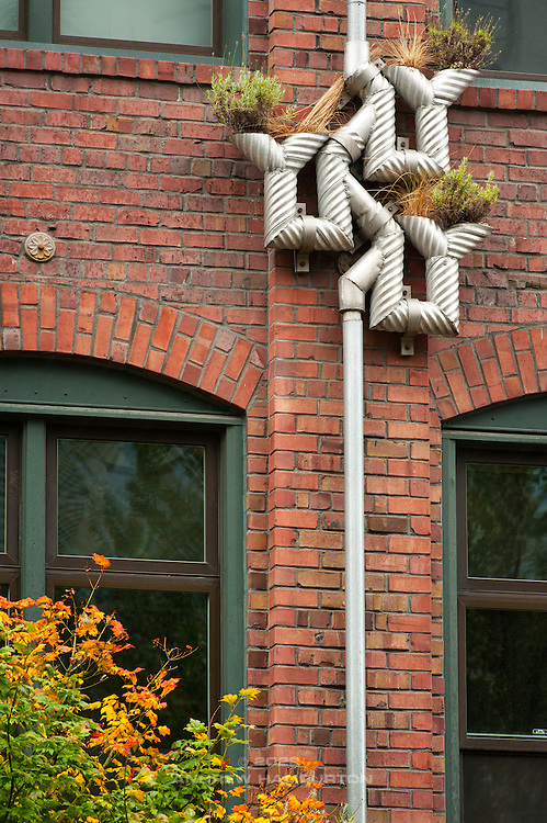 "Branching Downspouts at the 81 Vine Street Building in Seattle, by artist Buster Simpson.  These ""vertical planters"" bring Green Street elements to the streetscape as part of the Growing Vine Street Project.  The concept of Growing Vine Street is to use biofiltration and other Green Street elements to treat stormwater before it is released directly into Elliott Bay.  The downspout planters are made from corrugated aluminum pipe, connected in-line with the building's roof downspout."