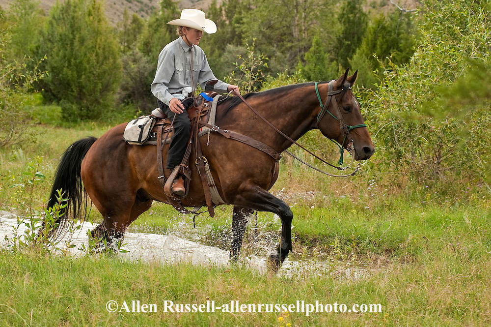 Trail Rider, teenager, boy, crosses water, Quarter Horse, Montana