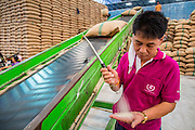 """15 NOVEMBER 2012 - PATHUM THANI, PATHUM THANI, THAILAND: A worker in a rice warehouse in Pathum Thani checks the quality of rice being stored there. The rice was bought by the Thai government under the rice pricing program, called the """"pledging scheme."""" The Thai government under Prime Minister Yingluck Shinawatra has launched an expansive price support """"scheme"""" for rice farmers. The government is buying rice from farmers and warehousing it until world rice prices increase. Rice farmers, the backbone of rural Thailand, like the plan, but exporters do not because they are afraid Thailand is losing its position as the world's #1 rice exporter to Vietnam, which has significantly improved the quality and quantity of its rice. India is also exporting more and more of its rice. The stockpiling of rice is also leading to a shortage of suitable warehouse space. The Prime Minister and her government face a censure debate and possible no confidence vote later this month that could end the scheme or bring down the government.    PHOTO BY JACK KURTZ"""