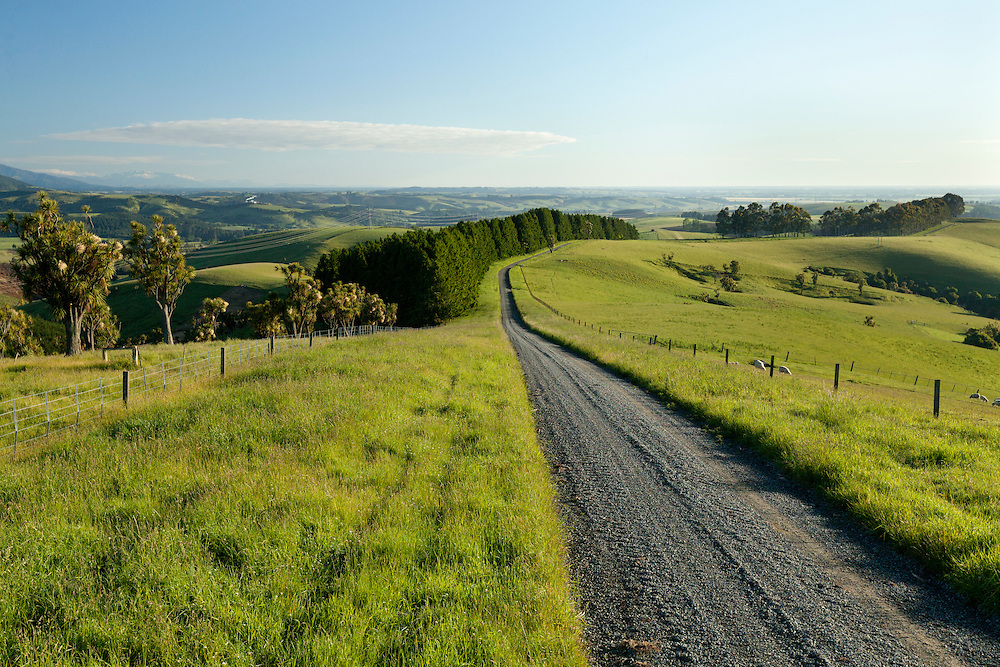 An unsealed road running through lush green hilly farmland near Pleasant Point, South Canterbury.