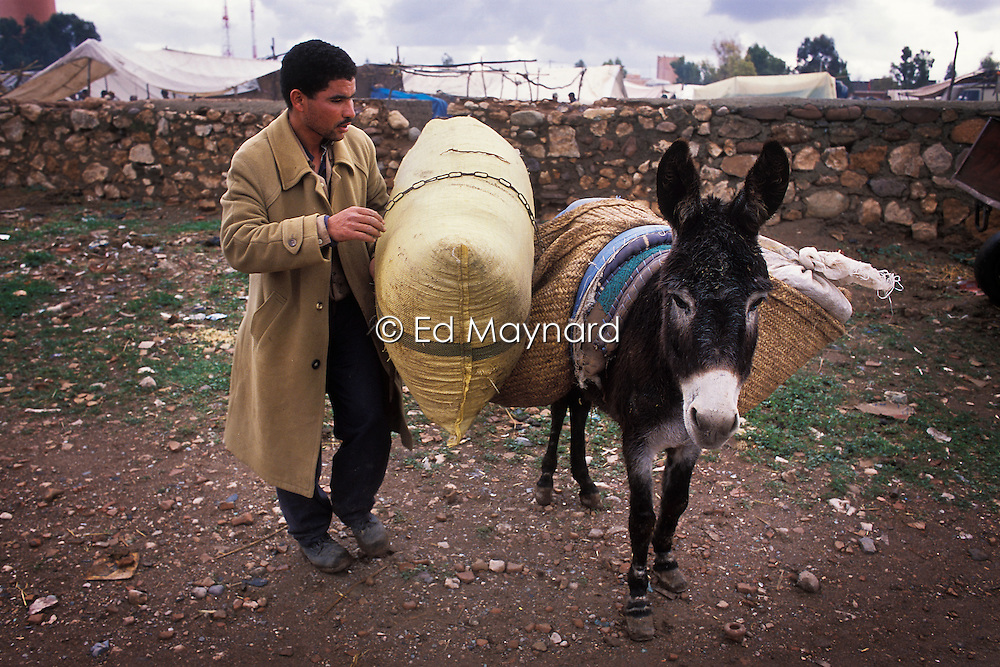 A man loads his donkey with goods and supplies bought in the souk at Tamaslouht, south of Marrakech, Morocco.