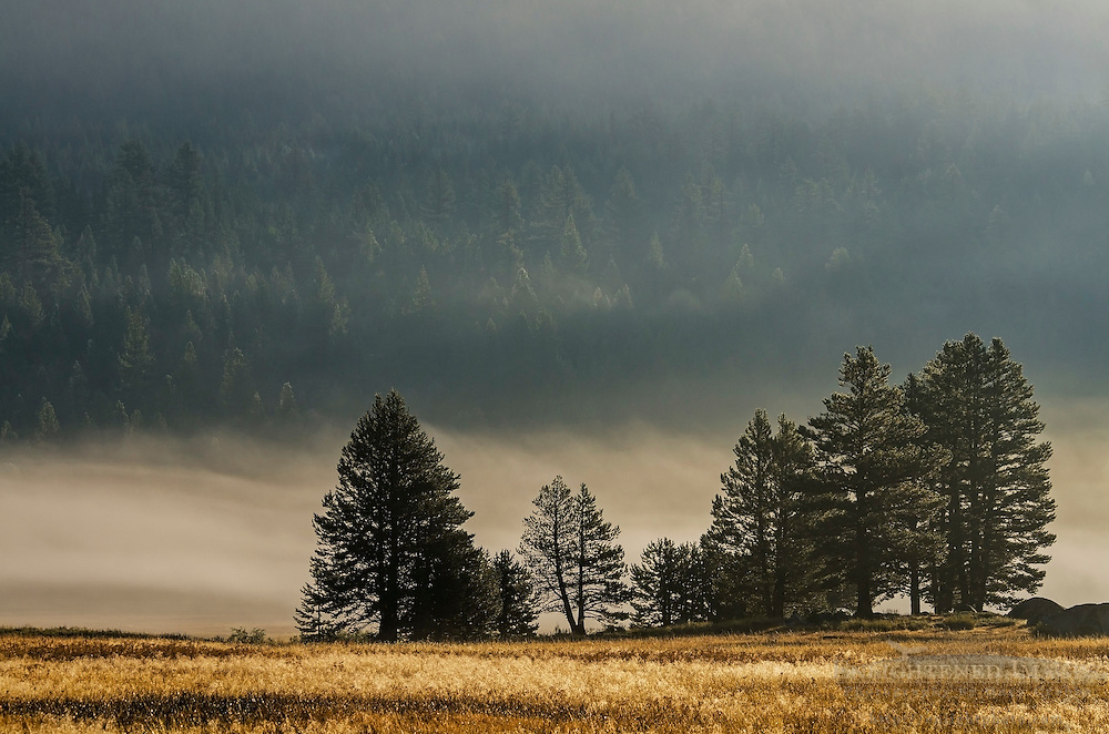 Trees in early morning mist, Hope Valley, Alpine County, California