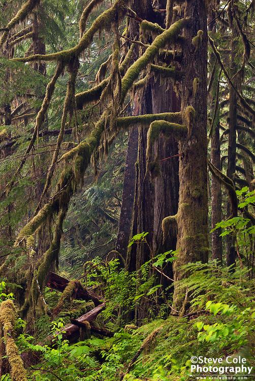 Deep Forest - Baker River Valley