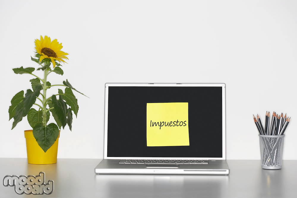 Sunflower plant on desk and sticky notepaper with Spanish text on laptop screen saying Taxes
