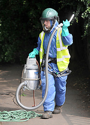 © licensed to London News Pictures.  29/07/11. London, UK.  Special protective equipment worn by a British Waterways  worker while he inspects a tree for  nests along Grand Union Canal at Brentford, West London today (29/07/2011) in an attempt to eradicate the dangerous alien Oak Processionary Moth.  The moths are hazardous to human health and strip English oak trees of foliage which can ultimately cause the trees to die. As pesticides are not allowed to be used near water, the moths must be 'sucked' out of the trees. The Oak Processionary Moth (OMP), which is native to southern and central Europe have irritating hairs that carry a dangerous toxin. The hairs are easily blown in the wind causing serious irritation to the skin, eyes and bronchial tubes of both humans and animals. Photo credit Stephen Simpson/LNP