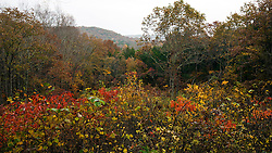 Overlook of hills in late autumn, Mammoth Cave National Park, Kentucky, United States of America