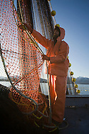 Commercial fisherman Eric Briese stacks the leadline while bringing the seine onboard F/V Agave during the 2007 Sitka Herring Sac Roe fishery.