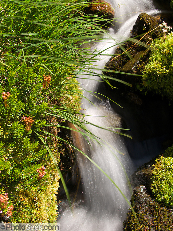 stream and grass in Mount Rainier National Park, Washington, USA
