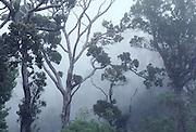 Kokee State Park, Kauai, Hawaii<br />