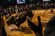 A bull rider tries to keep his balance on a swinging bull at a rodeo in Goiania, Brazil, Friday, Dec. 16, 2016. Considered one of the economic pillars of Brazil, hoarding increasingly huge swaths of land and spreading the same amounts of environmental degradation and land conflicts, the powerful agribusiness finds its heart, soul and voice in the city of Goiânia. Home of a million and a half souls it sits on the immense central plains of Brazil and nurtures a rodeo culture and cowboy lifestyle challenging its own urbanization, highlighting the archaic and rural character of Brazilian mindset and its society. (Dado Galdieri for the New York Times)