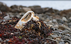THEMENBILD - ein weggeworfener verschmutzter Kanister mit Algen bedeckt an einem Strand bei Stein, Isle of Skye, Schottland, aufgenommen am 10.06.2015 // a discarded soiled canister covered with seaweed on a beach at Stein, Isle of Skye, Scotland on 2015/06/10. EXPA Pictures © 2015, PhotoCredit: EXPA/ JFK