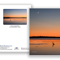 Heron at sunset Savage Harbour Prince Edward Island<br />